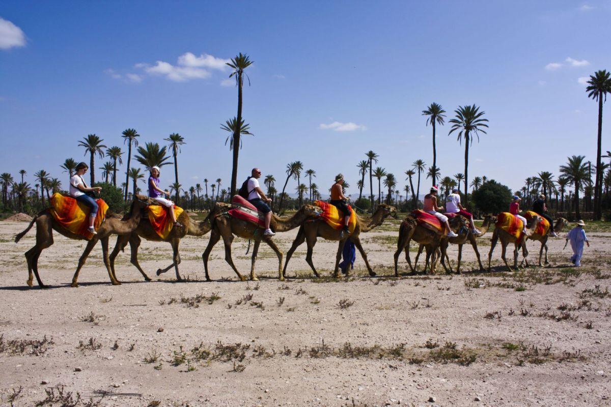 acitivity-marrakech-ride-camel.jpg